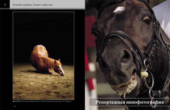 Иппофотография. Теория и практика