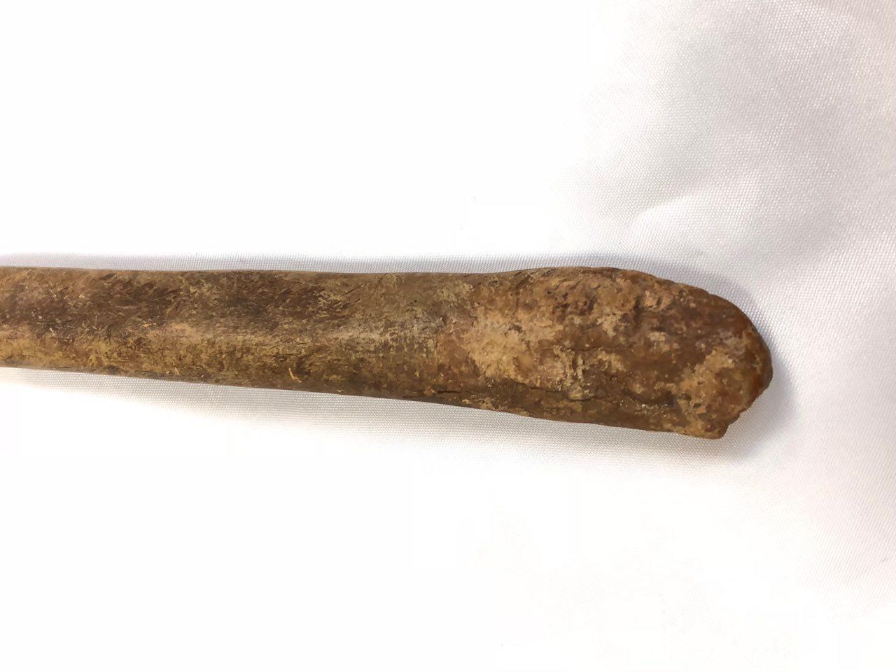 os de balenă în penis)