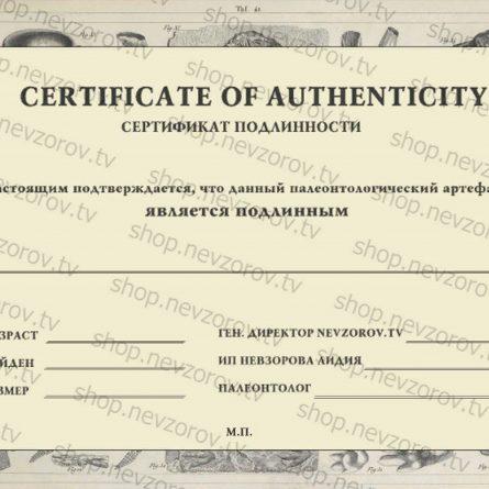 Сертификат подлинности артефакта