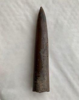 Белемнит Cylindroceras sp (фрагмокон) Юрский период, Рязанская область, Михайловцемент