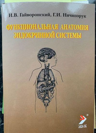 Функциональная анатомия эндокринной системы человека