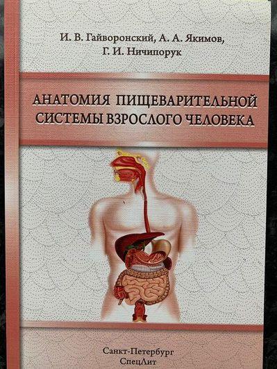 Анатомия пищеварительной системы взрослого человека