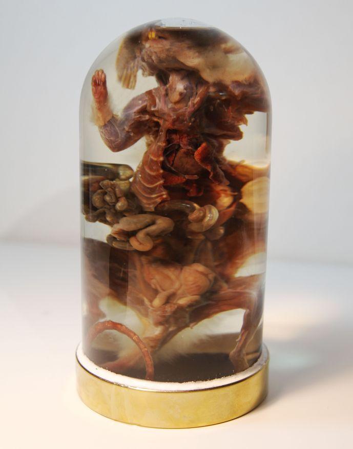 Анатомический препарат - Серая крыса (Rattus norvegicus) – Магазин