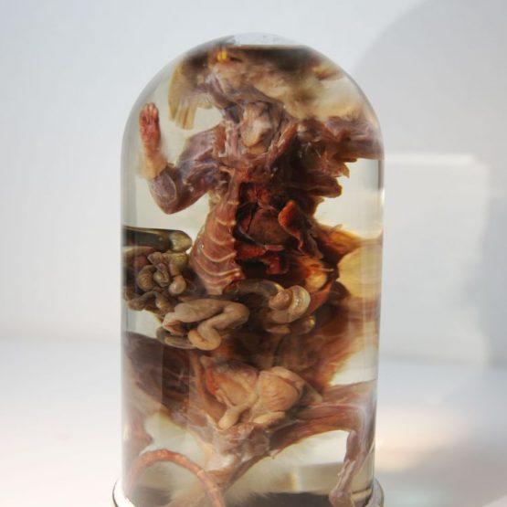 Анатомический препарат — Серая крыса (Rattus norvegicus)