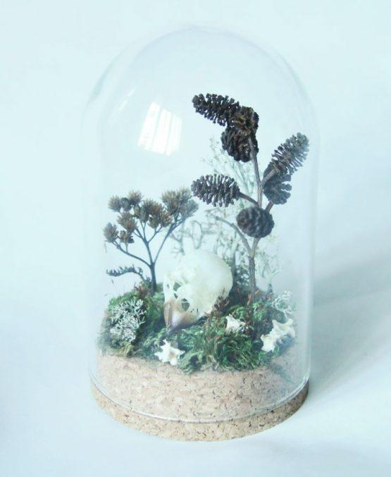 Череп снегиря (Pyrrhula pyrrhula)