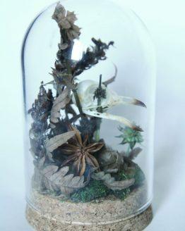 Череп дрозда белобровика (Turdus iliacus) в стеклянном куполе